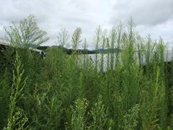 太陽光発電メンテナンス、モジュールパネル清掃 草刈り(除草)による雑草対策